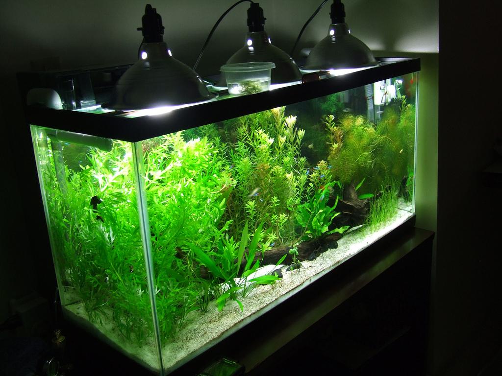 Освещение для растений своими руками фото